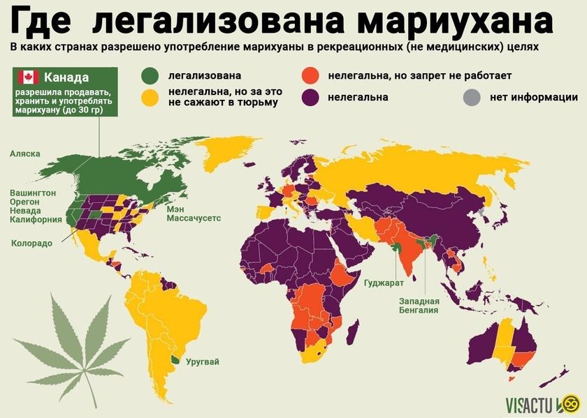 Карта конопли заказать портфель с марихуаной